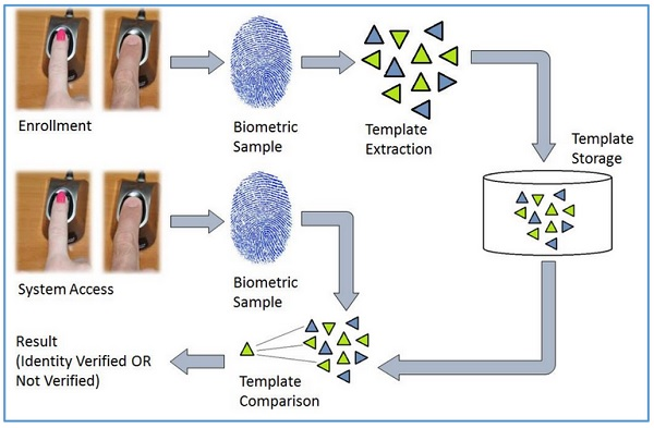 fingerprint identification and verification systems A fingerprint identification technology for use in personal identification verification (piv) cards that offers improved protection from identity theft meets the standardized accuracy criteria for.
