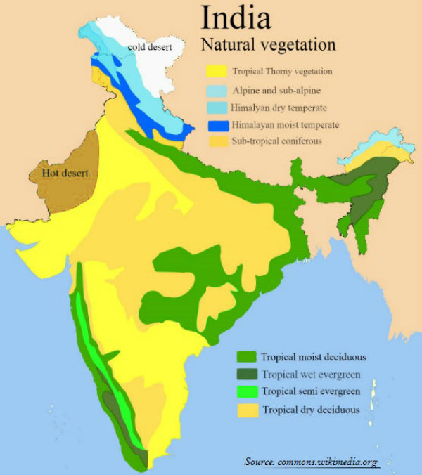 Types of Natural vegetation in India