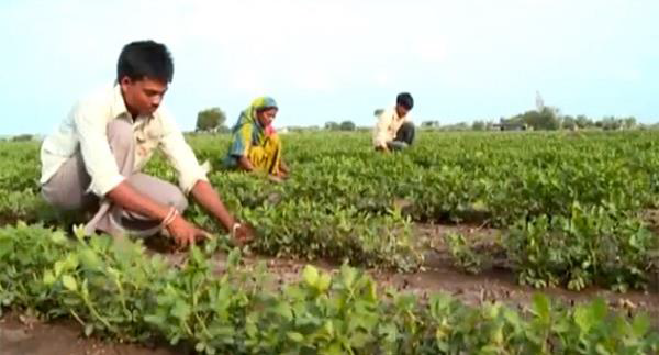 how to start agriculture in india