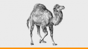 Perl for Beginners: Learn A to Z of Perl Scripting Hands-on Image