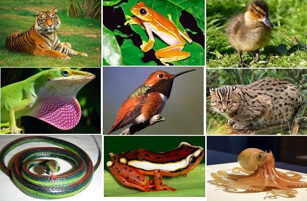 Image of: Animalia Characteristics Introduction The Organisms Air Freshener Biology Animalia Kingdom