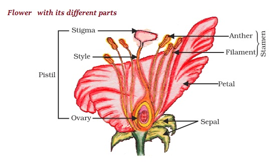 Sexual reproduction in plants images flowers