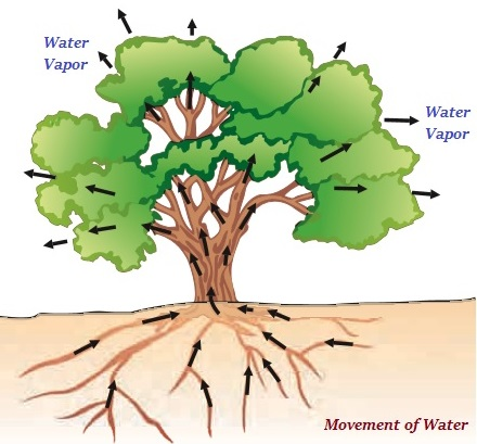 Movement of Water Plants