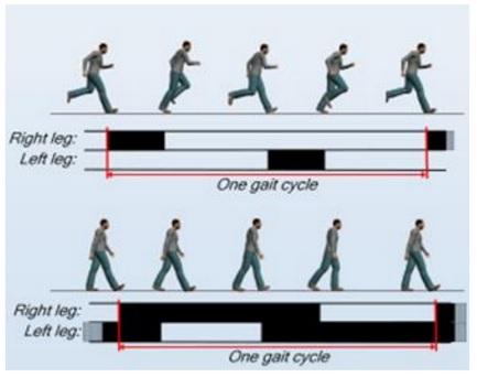 One Gait cycle