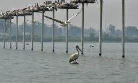 First-ever Pelican Festival