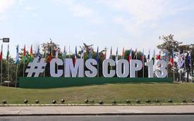 13th COP