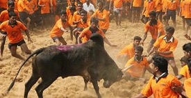Bull Taming Event
