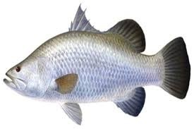 Current affairs september 2017 environment for Types of edible fish