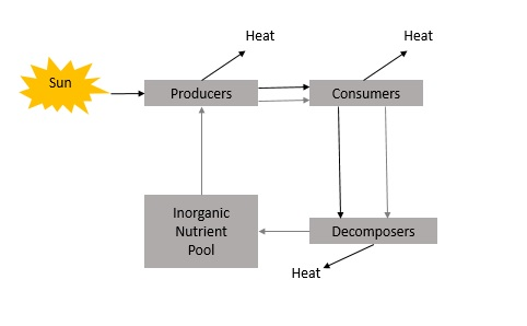A discussion on the ecosystems as energy flow systems