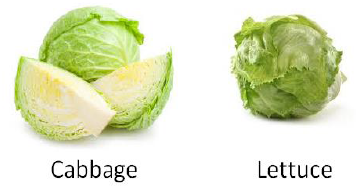 Bud Vegetables