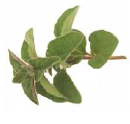 Oregano/Pizza Herb