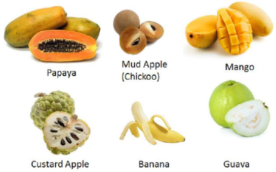 Pulpy Fruits