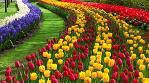 Land of Tulips