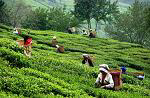 Tea City of India
