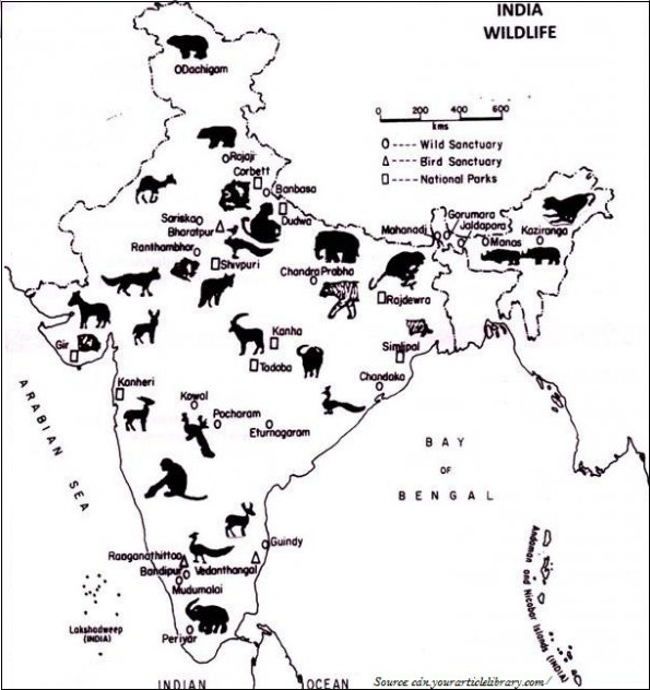 wildlife in india essay Short essay on sanctuaries in india essay on  role of wildlife sanctuaries in conserving species alike wildlife sanctuaries of national importance to conservation, usually due to some flagship faunal species, are named national.