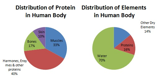 Distribution of Proteins