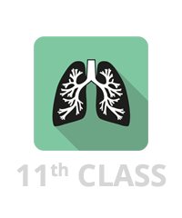 Breathing and Exchange of Gases Image